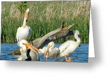 One Sassy Pelican And Friends, West Central Minnesota Greeting Card