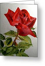 One Single Red Rose Greeting Card