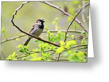 One Sparrow Greeting Card