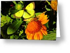 One Sulpher In Flight Greeting Card