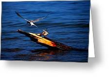 One Tern Flight Greeting Card
