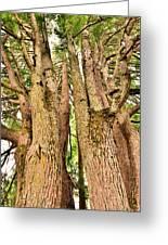 One Tree Six Trunks Greeting Card