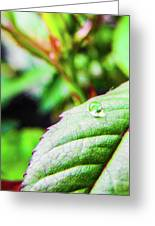 One Waterdrop Greeting Card