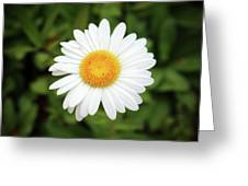 One White Daisy Greeting Card