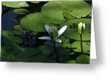 One White Petal Close-up Greeting Card