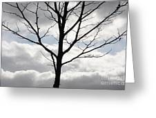 One Winter Tree With Clouds Greeting Card