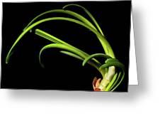 Onion Greens Greeting Card