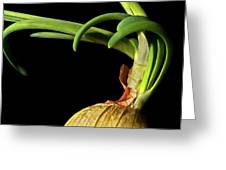 Onion Sprouting Greeting Card