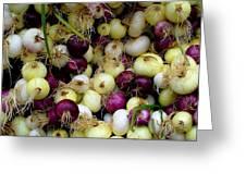 Onions Tri Color Greeting Card by Brenda Pressnall