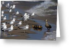Ducklings In Trouble - Oops Not Into Diversity Greeting Card