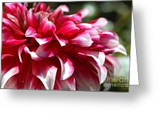 oozing With Life Dahlia Greeting Card