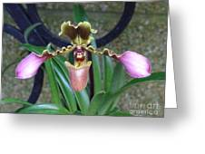 Open Arms Orchid Greeting Card