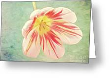 Open Bi-coloured Tulip Greeting Card