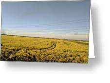 Open Field  Greeting Card