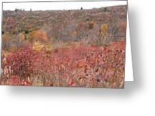 Open Field View Greeting Card