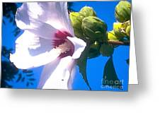 Open Hibiscus Flower With Deep Blue Sky Greeting Card