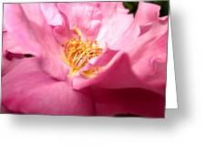Open Petal Greeting Card