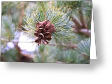 Open Pine Cone Greeting Card