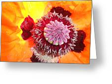 Open Poppy Greeting Card