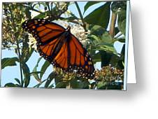 Opened Wings  Greeting Card