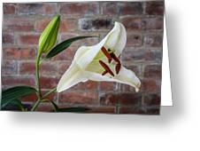 Opening White Lily Greeting Card