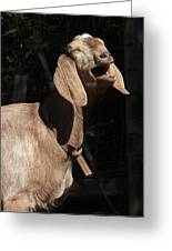 Operatic Goat Greeting Card