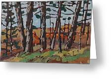 Opinicon November Forest Greeting Card