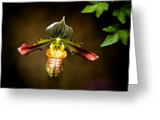 Oprah's Orchid Greeting Card