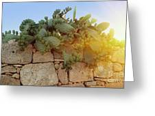 Opuntia Cactus In The Sunset Greeting Card