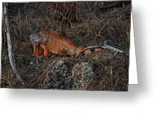 Oranage Iguana Greeting Card