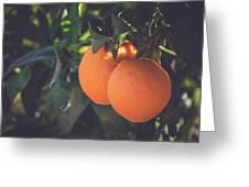 Orange #1 Greeting Card