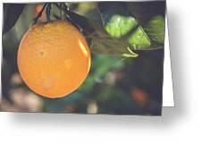 Orange #2 Greeting Card