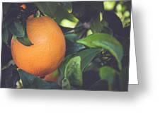 Orange #3 Greeting Card