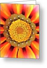 Orange African Daisy Greeting Card
