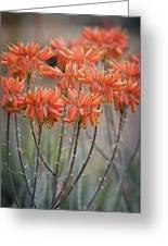 Orange Aloe  Greeting Card