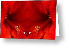Orange Amaryllis Hippeastrum Close-up Double Greeting Card