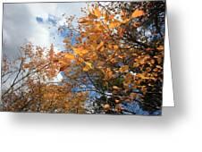 Orange And Blue Greeting Card