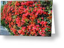 Orange And Colral-pink Flowers 2 Greeting Card