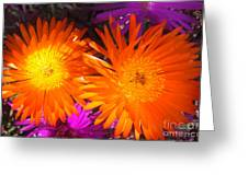 Orange And Fuchsia Color Flowers Greeting Card