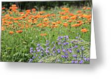 Orange And Purple Dream Flowers Greeting Card