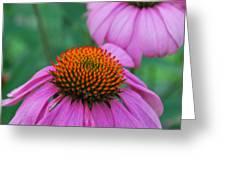 Orange And Purple Greeting Card