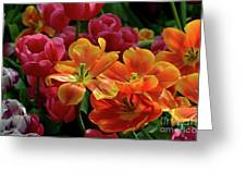 Orange And Red Tulip Lilies In Various Stages Of Bloom Greeting Card