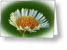 Orange And White Flower Greeting Card