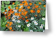 Orange And White Greeting Card