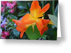 Orange And Yellow Canna Lily 2  Greeting Card
