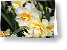 Orange And Yellow Double Daffodil Greeting Card
