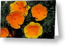 Orange And Yellow Flowers Greeting Card