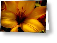 Orange And Yellow Lily Greeting Card