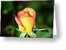 Orange And Yellow Rose Greeting Card