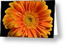 Orange And Yellow Tip Gerbera Daisy Greeting Card